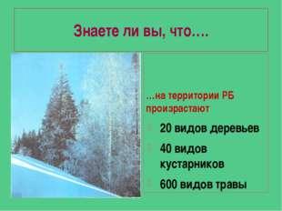 Знаете ли вы, что…. …на территории РБ произрастают 20 видов деревьев 40 видов