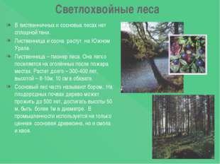 Светлохвойные леса В лиственничных и сосновых лесах нет сплошной тени. Листве