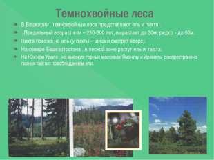 Темнохвойные леса В Башкирии темнохвойные леса представляют ель и пихта . Пре
