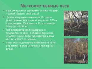 Мелколиственные леса Леса, образованные деревьями с мелкими листьями – осиной