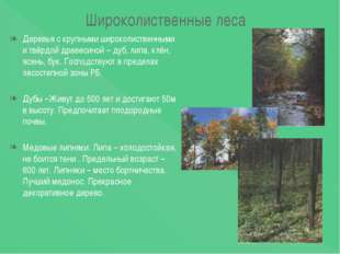 Широколиственные леса Деревья с крупными широколиственными и твёрдой древесин