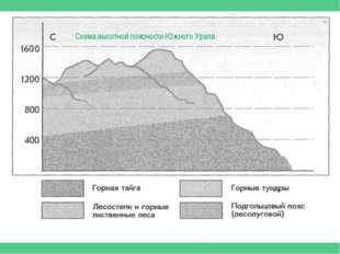 Схема высотной поясности Южного Урала