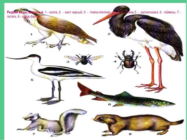 Редкие виды животных 1 - скопа; 2 - аист черный; 3 - пчела-плотник; 4 - жук...