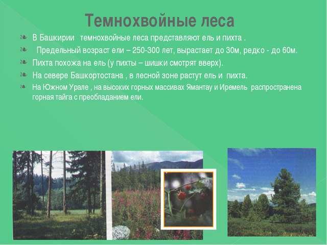 Темнохвойные леса В Башкирии темнохвойные леса представляют ель и пихта . Пре...