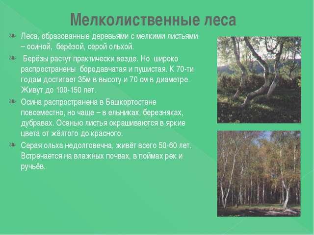 Мелколиственные леса Леса, образованные деревьями с мелкими листьями – осиной...