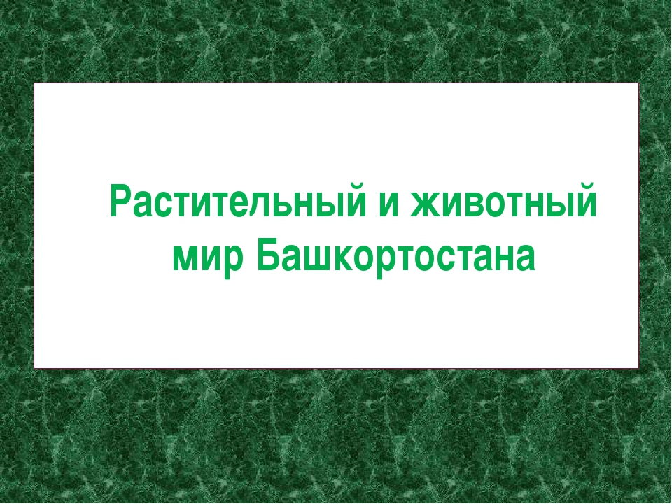 Растительный и животный мир Башкортостана