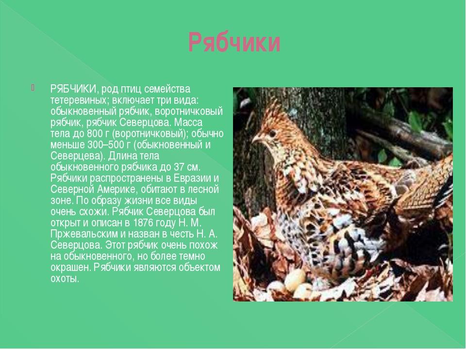 Рябчики РЯБЧИКИ, род птиц семейства тетеревиных; включает три вида: обыкнове...