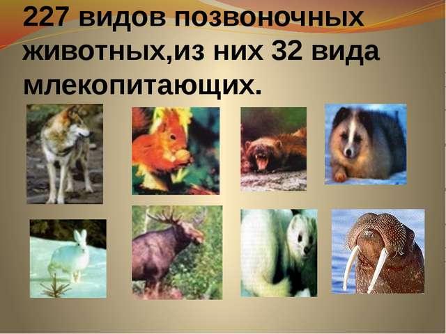227 видов позвоночных животных,из них 32 вида млекопитающих.
