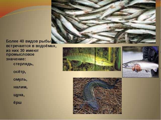 Более 40 видов рыбы встречается в водоёмах, из них 30 имеют промысловое знач...