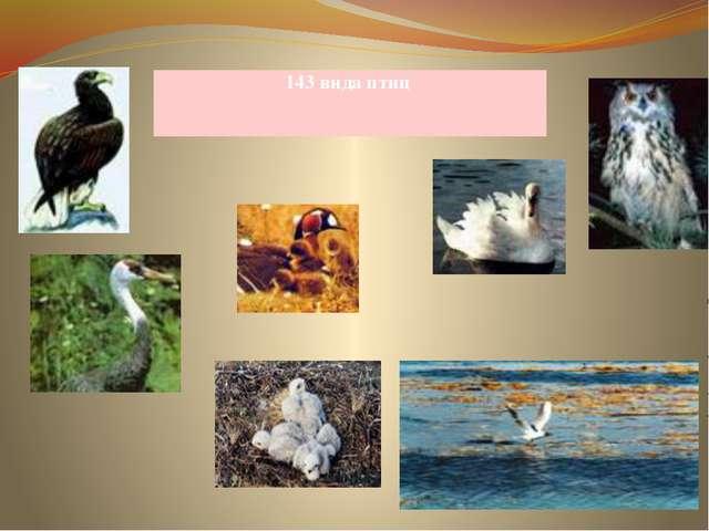 143 вида птиц
