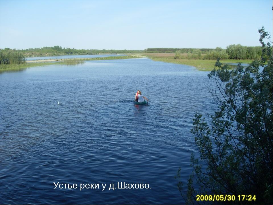 Устье реки у д.Шахово.