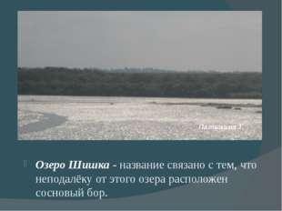 Озеро Шишка - название связано с тем, что неподалёку от этого озера располож