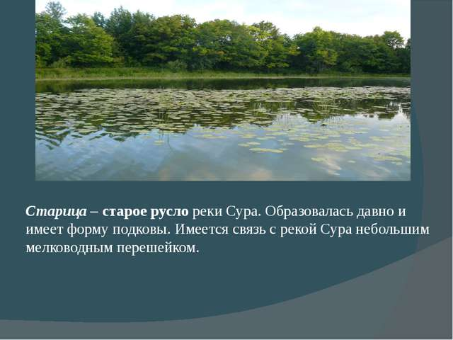 Старица – старое русло реки Сура. Образовалась давно и имеет форму подковы. И...
