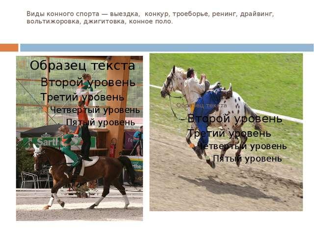 Виды конного спорта — выездка, конкур, троеборье, ренинг, драйвинг, вольтижор...