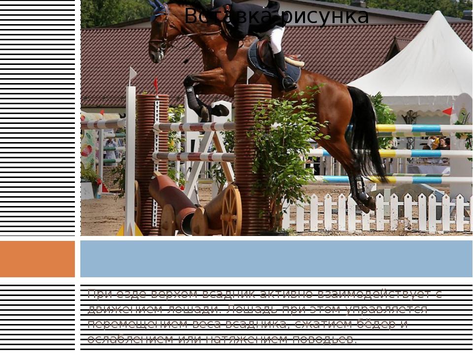 При езде верхом всадник активно взаимодействует с движением лошади. Лошадь пр...
