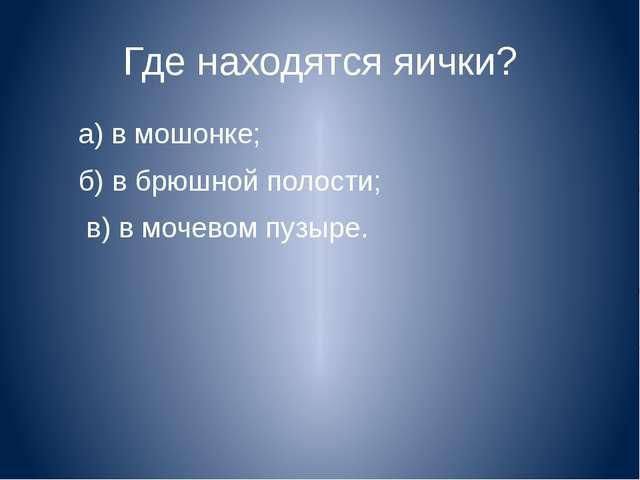 Где находятся яички? а) в мошонке; б) в брюшной полости; в) в мочевом пузыре.