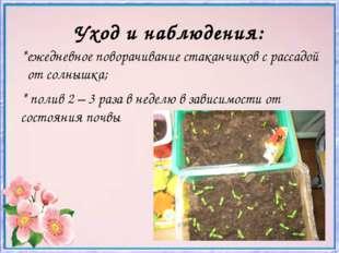 Уход и наблюдения: *ежедневное поворачивание стаканчиков с рассадой от солныш