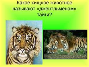 Какое хищное животное называют «джентльменом» тайги?