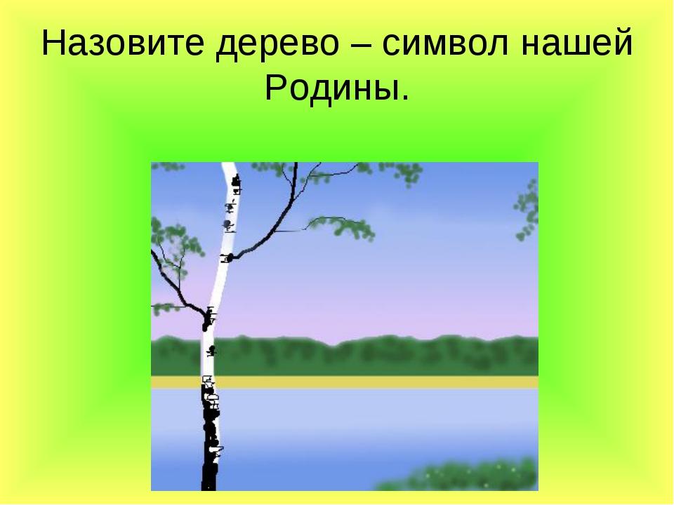 Назовите дерево – символ нашей Родины.