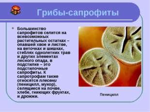 Грибы-сапрофиты Большинство сапрофитов селится на всевозможных растительных