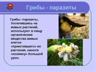 Грибы - паразиты Грибы -паразиты, поселившись на живых растений, используют