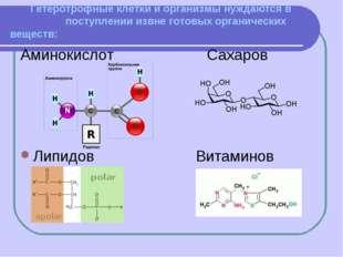 Гетеротрофные клетки и организмы нуждаются в поступлении извне готовых орган