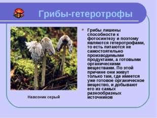 Грибы-гетеротрофы Грибы лишены способности к фотосинтезу и поэтому являются