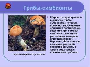 Грибы-симбионты Широко распространены в природе грибы-симбионты, которые пол