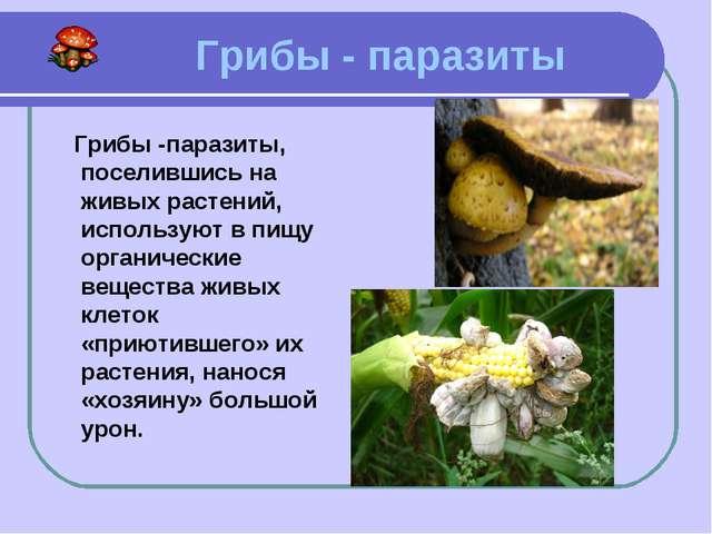 Грибы - паразиты Грибы -паразиты, поселившись на живых растений, используют...