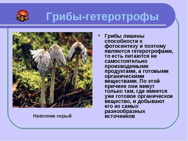 Грибы-гетеротрофы Грибы лишены способности к фотосинтезу и поэтому являются...