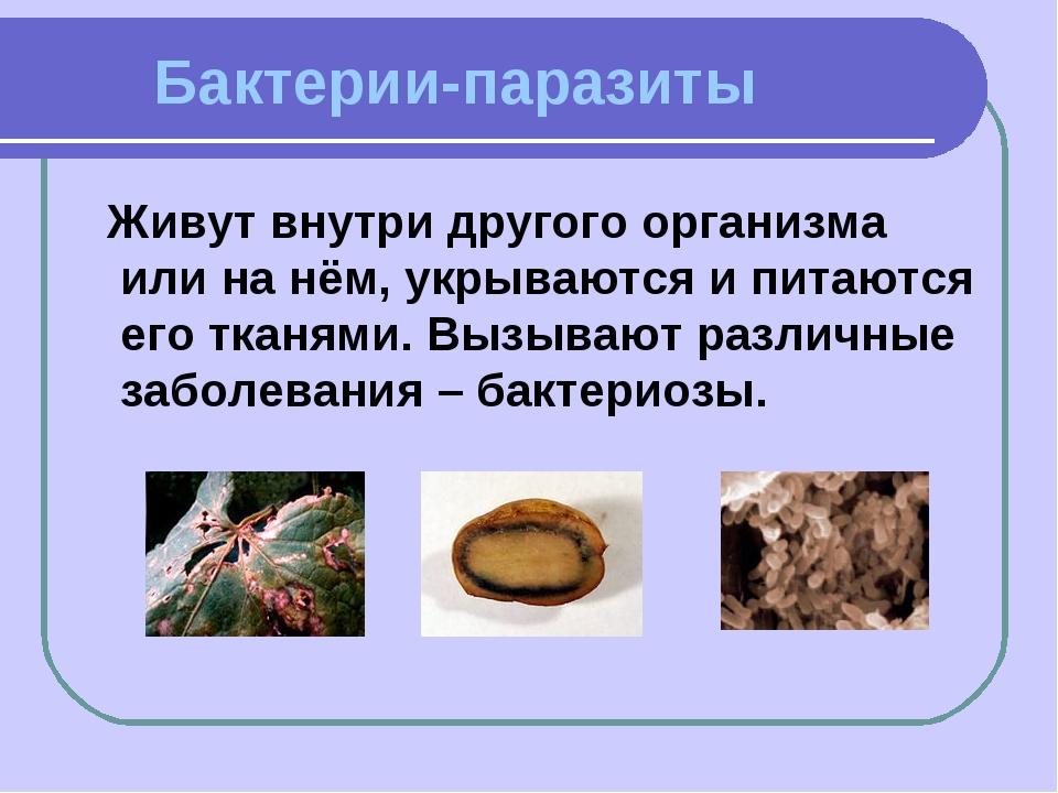 Бактерии-паразиты Живут внутри другого организма или на нём, укрываются и пи...