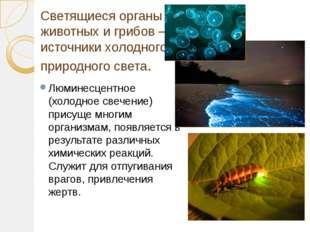 Светящиеся органы животных и грибов – источники холодного природного света. Л