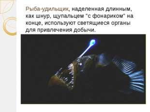 """Рыба-удильщик, наделенная длинным, как шнур, щупальцем """"с фонариком"""" на конце"""
