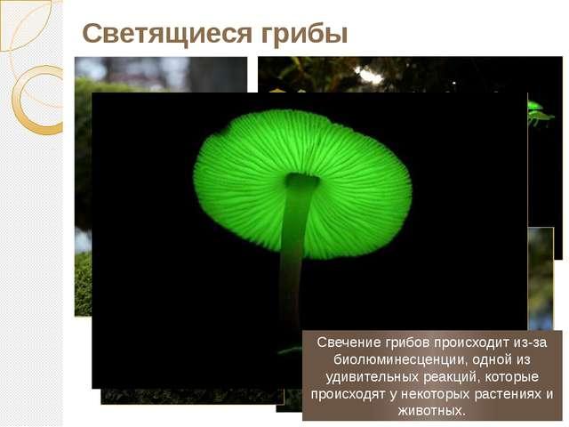 Светящиеся грибы Свечение грибов происходит из-за биолюминесценции, одной из...