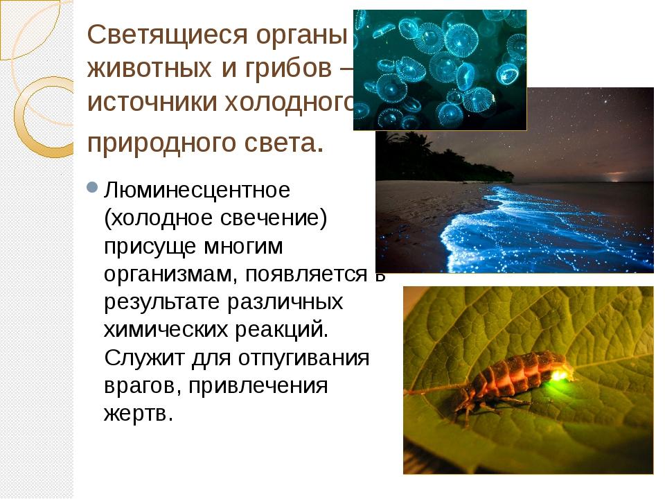 Светящиеся органы животных и грибов – источники холодного природного света. Л...