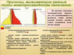 На рисунке показаны половозрастные пирами-ды для развивающихся и развитых ст