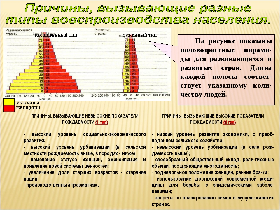 На рисунке показаны половозрастные пирами-ды для развивающихся и развитых ст...