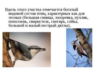 Вдоль этого участка отмечается богатый видовой состав птиц, характерных как