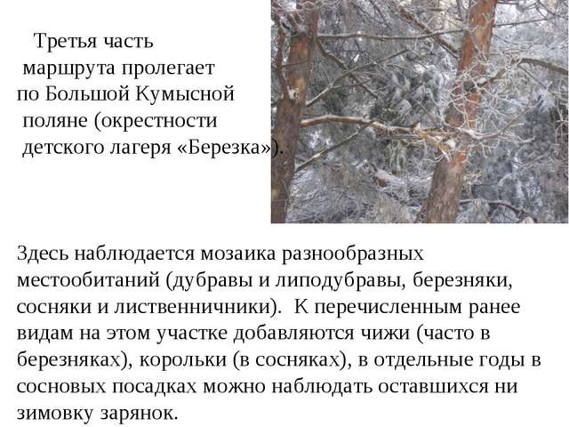 Третья часть маршрута пролегает по Большой Кумысной поляне (окрестности детс...