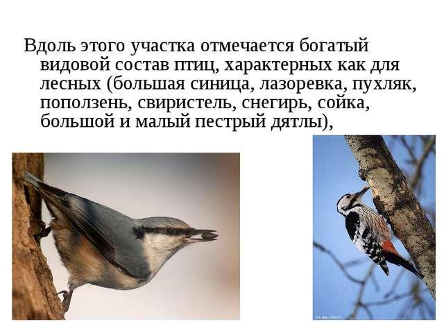 Вдоль этого участка отмечается богатый видовой состав птиц, характерных как...