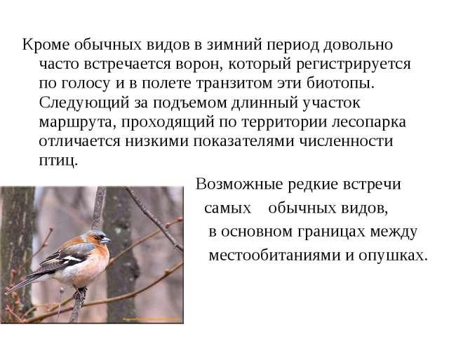 Кроме обычных видов в зимний период довольно часто встречается ворон, который...