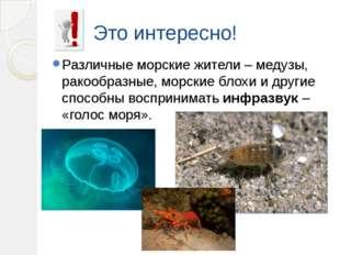 Это интересно! Различные морские жители – медузы, ракообразные, морские блохи