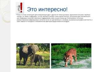 Это интересно! Тигры и слоны используют для коммуникации друг с другом не тол