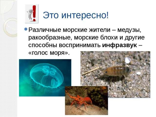 Это интересно! Различные морские жители – медузы, ракообразные, морские блохи...