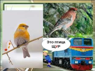 Это птица ЩУР