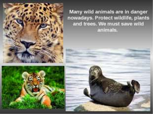 Many wild animals are in danger nowadays. Protect wildlife, plants and trees.