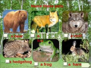 a hare a frog a hedgehog a bear a fox a wolf Name these pets