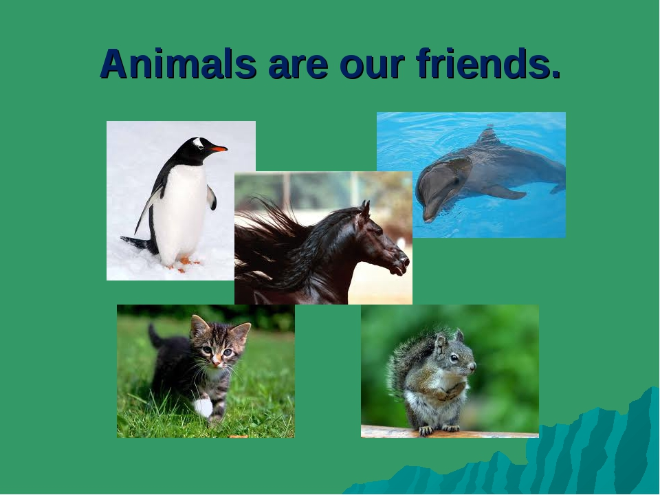 Animals are our friends.