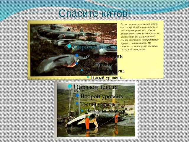 Спасите китов!