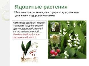 Ядовитые растения Запомни эти растения, они содержат яды, опасные для жизни и
